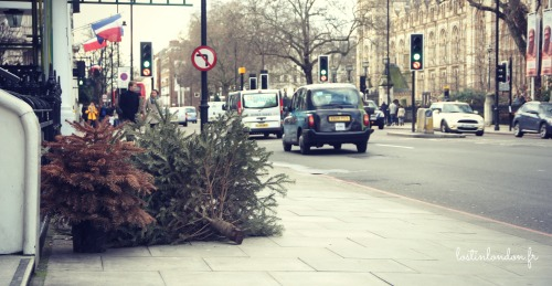 christmas tree january london