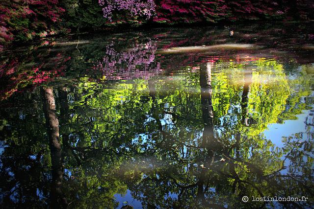 richmond park london