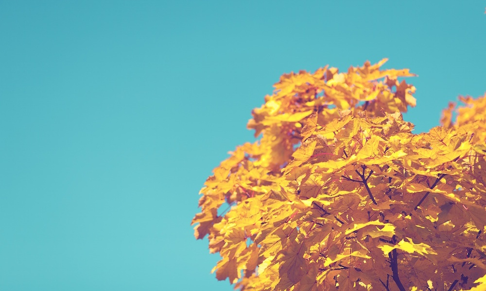 fall london autumn